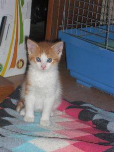 1 kotě