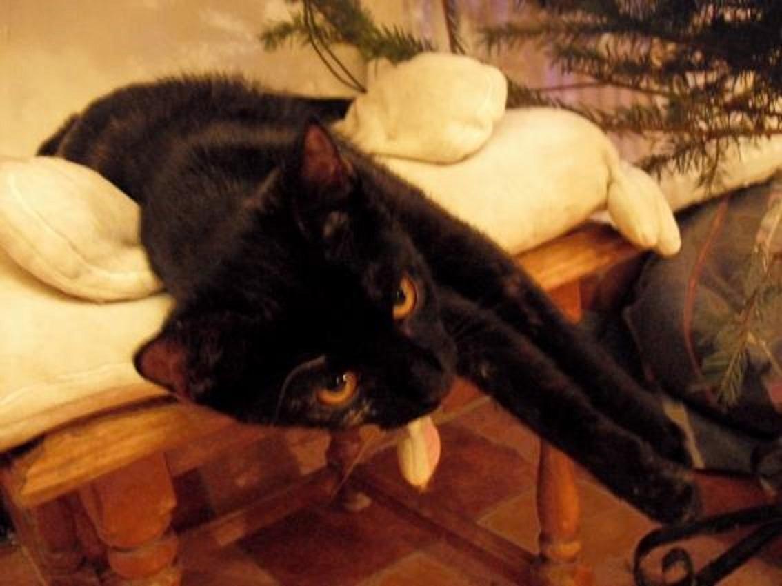 černé kotě1