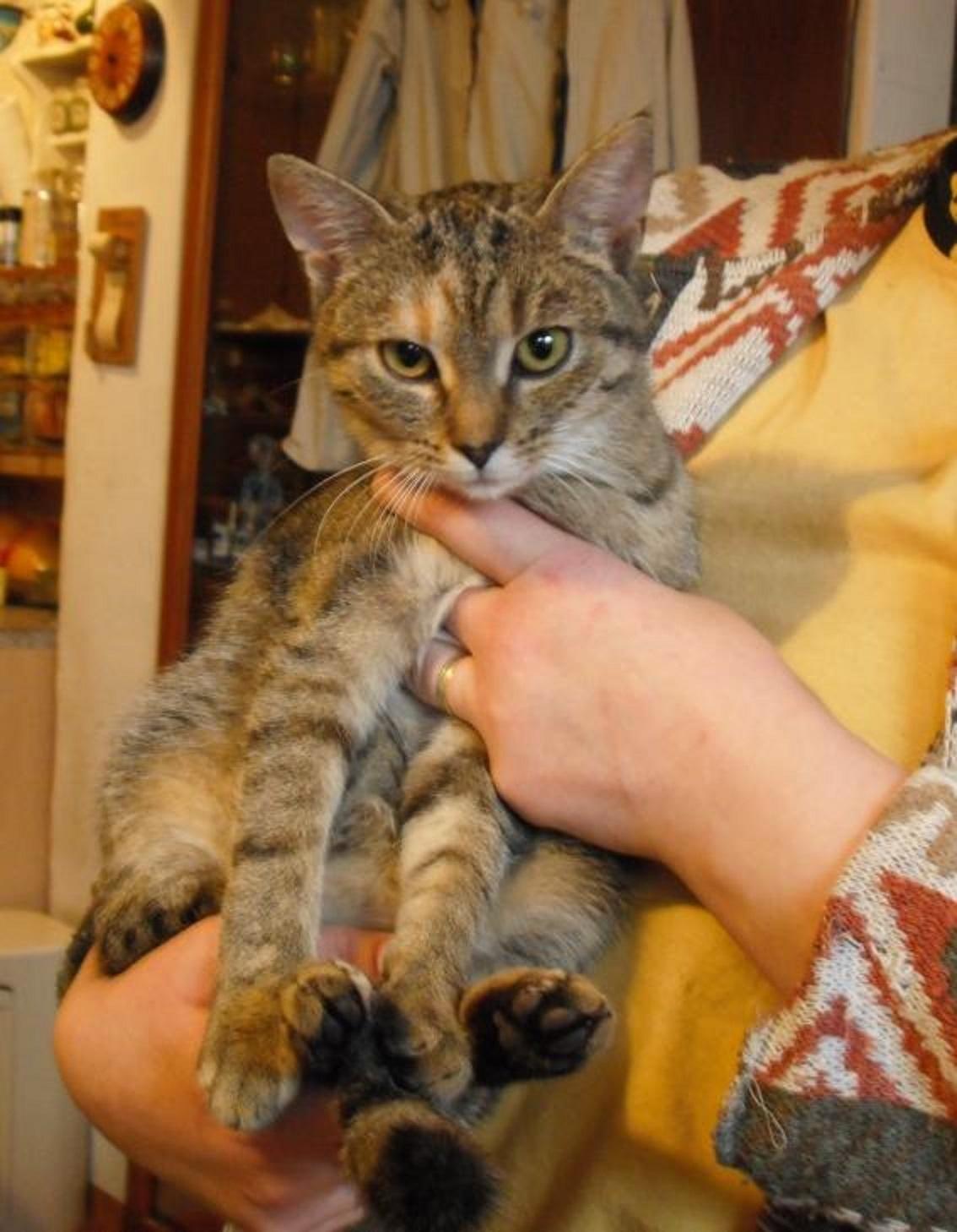 5 měsíční kočička nalezena U kOZOHLOD