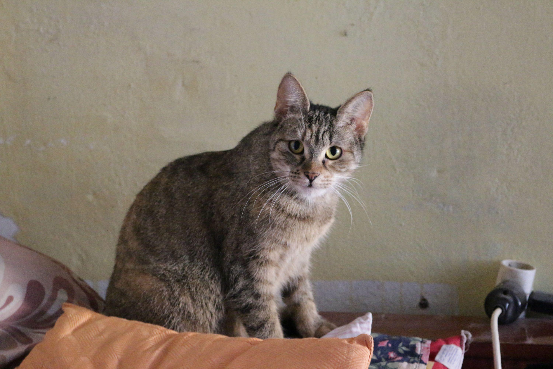 Roman-kočka1
