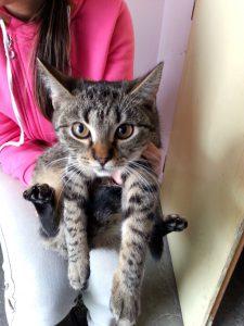 mourovatá kočička