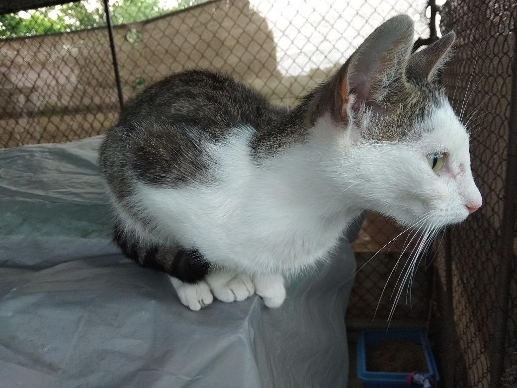 kočka Horky1